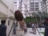 위락 공원 훈장 사용 대추 야자 나무