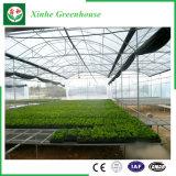 Chambre verte en plastique de potager de Multi-Envergure d'agriculture