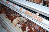 Maquinaria agricultural das aves domésticas da camada da galinha