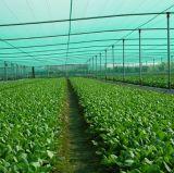 Plantas de legumbres verdes enrejado de insectos Nets