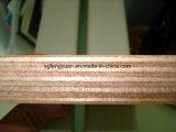 hoja perforada de la madera contrachapada de 12m m, madera contrachapada comercial para los muebles