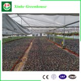 Estufas da estufa da folha do PC/folha do policarbonato/casa verde para vegetais/flores/frutas