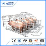 Caisse galvanisée de porc de gestation de truie de porcs de porc