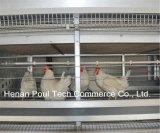 Tipo automatico sistema di H della gabbia del pollo da carne del blocco per grafici per il coltivatore