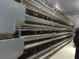 Цыплятина арретирует для проарретированного оборудования слоев