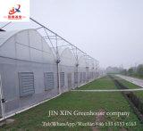 Serre chaude de constructeur de la Chine de prix usine et de bonne qualité