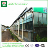 Agricultura Filme Multi-Span econômica Green House