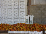 Fangyuan ENV Machines per The Production di Fruit Boxes