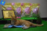 Vier Arten Tofu-Katze-Sänfte