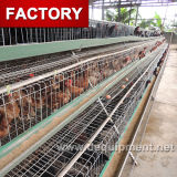 Cage galvanisée automatique de couche d'oeufs de poulet de ferme avicole pour le Nigéria