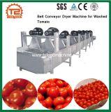 Après le lavage de la tomate Le séchage de l'air sécheur d'équipement/convoyeur à courroie de la machine pour la tomate lavée