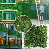 Le plastique décoratif de vert de feuille de LIERRE de jardin protège la haie artificielle de frontière de sécurité