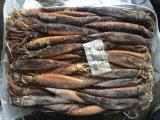 Gefrorenes Illex Argentinus/Argentinien-Kalmar für Köder