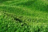 住宅区域の庭の余暇領域の景色の草のための安い価格の人工的な草