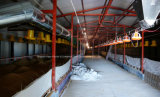 Construcción personalizada de la casa de la avicultura con el material de la estructura del capítulo de acero y el equipo automático