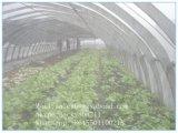 フルーツの反鳥および反昆虫のための農業の反昆虫のネット
