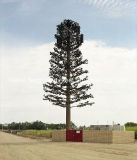صنع وفقا لطلب الزّبون صاحب مصنع أصليّة اتّصال بعديّ يموّه شجرة برج