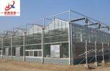 Serre chaude en verre intelligente pour le type de Venlo avec culture de légumes
