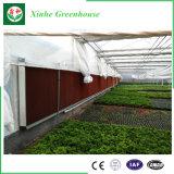 Película plástica de la fábrica de Xinhe para el invernadero, invernadero de cristal fácilmente ensamblado del jardín