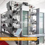 Galvanisé à chaud automatique des couches de la volaille de la cage farm equipment