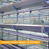 H-Feld-automatischer Huhn-Rahmen für Geflügelfarm für Verkauf