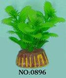수족관 식물 (0896)