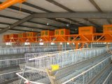 96, 120, 128, de Kooi van de Kip van de Laag van de Batterij van de Capaciteit van 160 Vogels