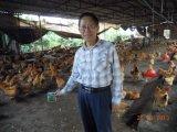 Пищевая добавка Unigrow для любого Breeding цыпленка
