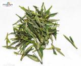Tè verde con l'aroma naturale del fiore dell'orchidea