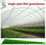Serre chaude intelligente de film de la Chine Po/PE pour la plantation