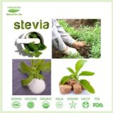 Bester Qualitätsstevia-Puder-Auszug mit Stevioside