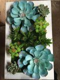 Plantas y flores artificiales de la planta suculenta Gu-SD-15116