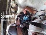 Ecógrafo veterinario portátil de Meditech con sonda lineal