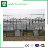 Verwendetes Venlo Glasgewächshaus für Werbung
