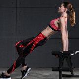 Ginnastica che esegue l'abito stretto di yoga delle donne di allenamento di misura asciutta, pantaloni di yoga