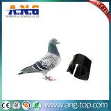 Anneau de Pigeon bande RFID pour identification des animaux et de la gestion