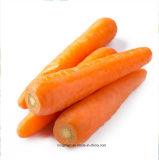 Цена дешево 2017 свежих морковей Китая оптовых продаж самое низкое