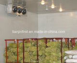 Chambre froide de la Chine pour le légume de poulet de poissons de viande de fruits de mer