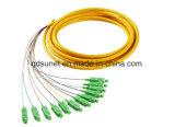 12cores образовало отрезок провода (SC/UPC)