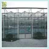 다중 경간 꽃을%s 유리제 녹색 집