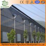 Muti-Span Сборные стальные конструкции пленку для выращивания овощей выбросов парниковых газов