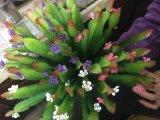 Plantes et fleurs artificielles de la centrale succulente Gu-SD-15116