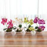 Trifurcação Phalaenopsis plantas artificiais Flores artificiais Bonsai