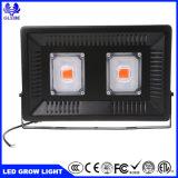 2018 la PANNOCCHIA quadrata personalizzata popolare LED coltiva 100W chiaro
