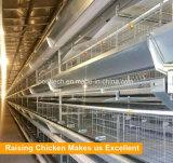 Клетка цыпленка слоя высокого качества автоматическая для профессиональной фермы слоя