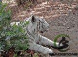 Tiger Cage Mesh, Tiger Tiger de maillage de clôture à mailles de boîtier