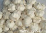 Aglio fresco di bianco cinese di buona qualità del nuovo raccolto
