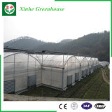 野菜のためのPE Film/Po Film/PVCのフィルムの温室の/Greenの家か温室または