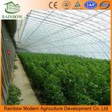 マルチスパンのトマトのための太陽農業の温室