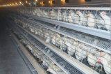 Клетка цыпленка кладя курицы хорошего качества & оборудование курятника цыпленка